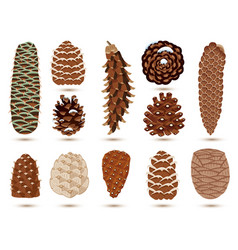 Set pine and spruce cones isolated on white vector