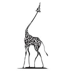 graceful giraffe reaching for food vector image