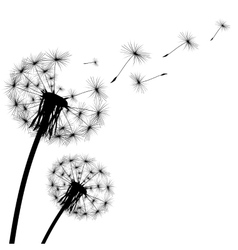 black silhouette with flying dandelion buds vector image vector image