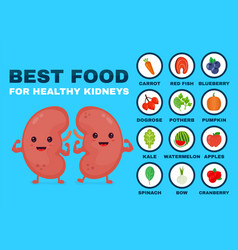 Best food for strong kidneys strong healthy vector