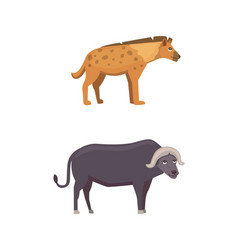 Buffalo and hyena safari isolated vector