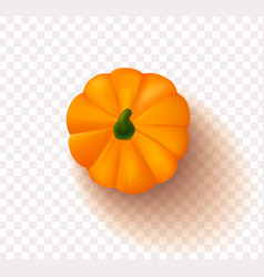 orange pumpkin isolated on a transparent vector image