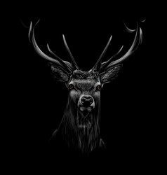 portrait of a deer head on a black background vector image