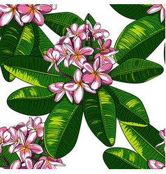 Seamless pattern with plumeria flowers and vector