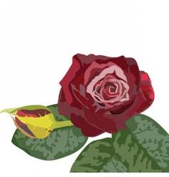 Watercolor Dark Red Rose bouquet vector image