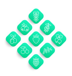 berries line icons set vector image vector image