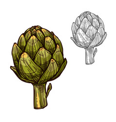 Artichoke seasoning plant sketch plant icon vector