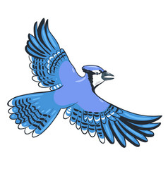 Blue jay flies isolate on a white background vector