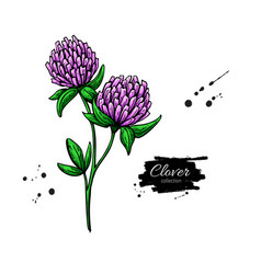 Clover flower drawing set isolated wild vector