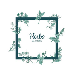 hand drawn medical herbs frame vector image