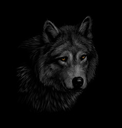 portrait of a wolf head on a black background vector image