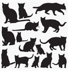 russian blue cat silhouettes vector image