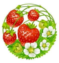 strawberry round composition vector image