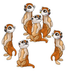 funny family of meerkats animals isolated vector image