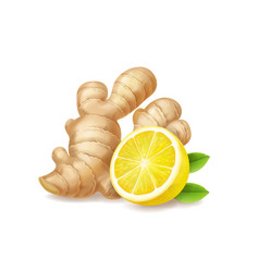 Lemon and ginger root isolated vector