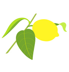 lemon on branch isolated on white background vector image