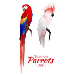 tropical parrots realistic set vector image