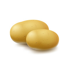 Two new yellow raw whole unpeeled potatoes vector