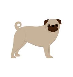 pug dog- vector image