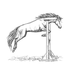 White horse jumping over barrier sketch portrait vector image vector image