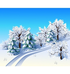 Winter landscape with trees and road vector image vector image