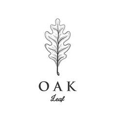 Hand drawn oak leaf designs vector