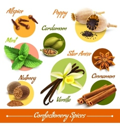 Herbs and spices set vector image