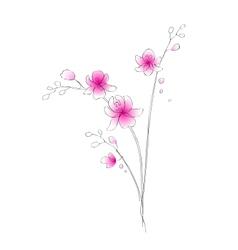 Watercolor orchid sketch vector image