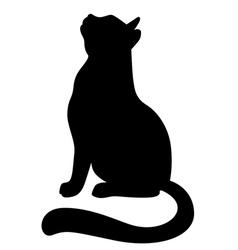 cat ap vector image vector image