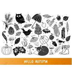 autumn doodles vector image