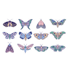 colorful moths and butterflies vector image