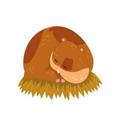 Cute cartoon hamster character sleeping on the vector