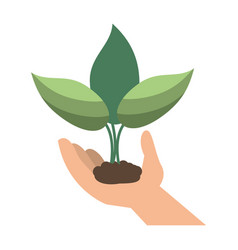 hand holding plant leaves vector image