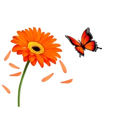 Nature summer orange flower with butterfly vector