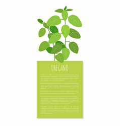 Oregano plant herbal spice tasty natural product vector