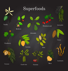 Set of hand drawn superfood acai goji cacao vector