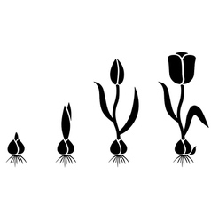 tulips cycle vector image vector image