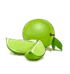 Ripe lime and slice vector image