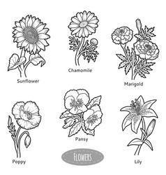 Set flowers black and white collection vector