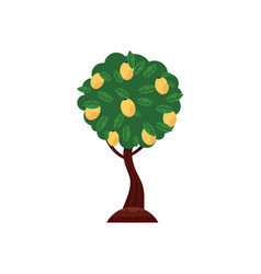 flat green abstract tree with foliage icon vector image
