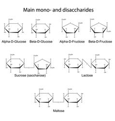 Main cyclic monosaccharides and disaccharides vector image vector image
