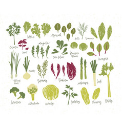 Collection of green plants bundle of tasty vector