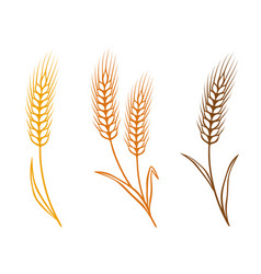 colorful wheat vector image