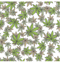 Seamless texture marijuana three vector