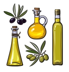 Set of olive oil bottles with black and green vector image