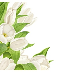 White tulips on white background vector image