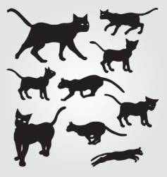 domestic cats vector image