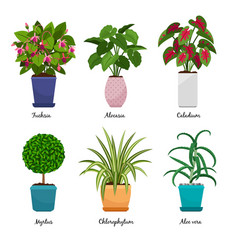 Cartoon houseplants in pots vector