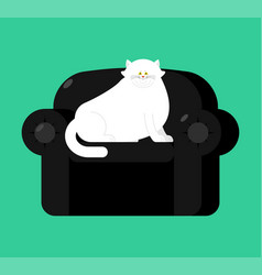 Fat white cat on soft armchair thick big pet on vector
