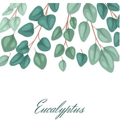 square postcard with flat eucalyptus with place vector image